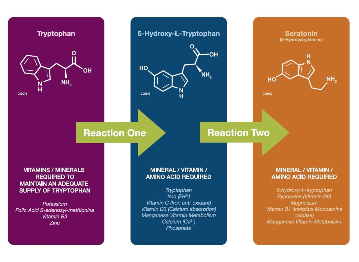 Tryptophan to Seratonin reaction